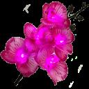 Светодиодные орхидеи